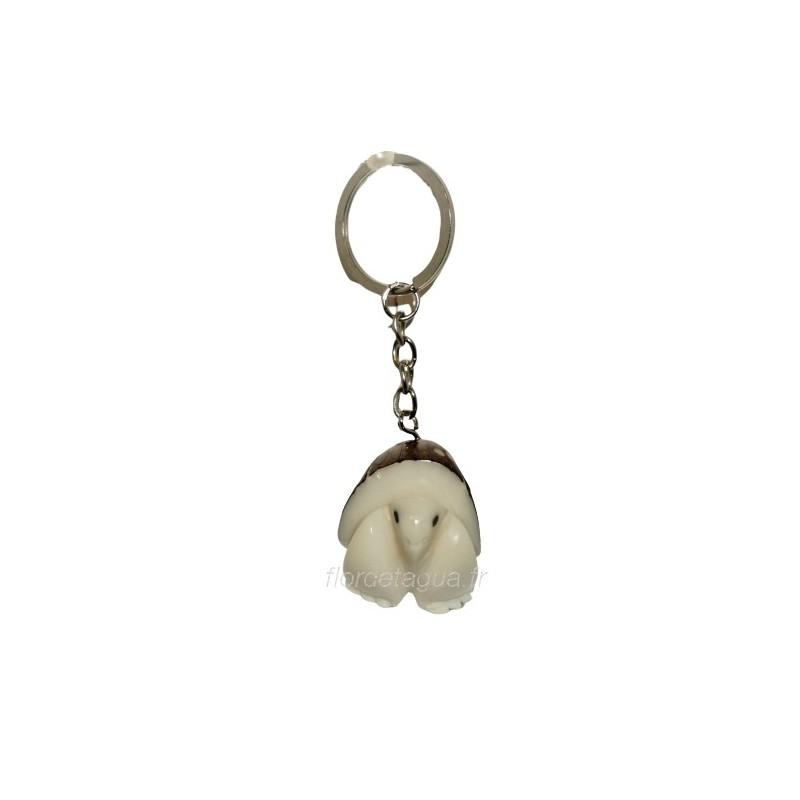 Porte clés Tortue de Terre en tagua vue de face